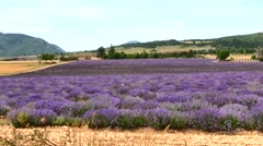 Lavender Fields and stone building, Provence, France - stock footage