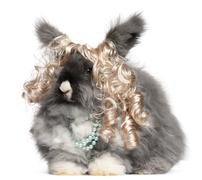 English Angora rabbit wearing wig and pearls in front of white background - stock photo