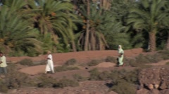Family walking in the middle of a palm grove in Morocco Stock Footage
