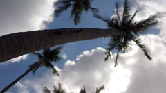Coconut Palm Trees Against Blue Sky. Timelapse Stock Footage