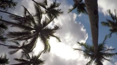 Coconut Palm Trees in Blue Sky with Gloomy Clouds. Timelapse Stock Footage