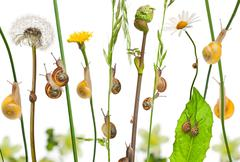Pastoral composition of flowers and Garden snails, Helix aspersa, and Mediterran - stock photo