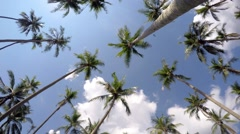 Coconut Palm Trees against Blue Tropical Sky. Time Lapse Arkistovideo