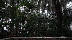 Tropical vegetation in the greenhouse - stock footage