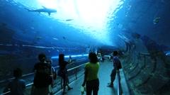 People looking the ocean fish in aquarium tunnel,Far Glory Ocean Park Stock Footage