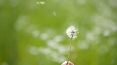 Mature dandelion blow away Stock Footage