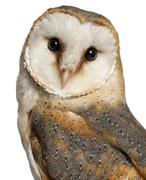 Portrait of Barn Owl, Tyto alba, in front of white background - stock photo