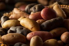 Raw Organic Fingerling Potatoes Stock Photos