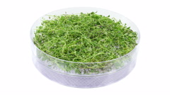 Time-lapse of drying thyme herb (UHD-4K) Stock Footage