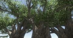 4k  butterfly flying under tree,dandelion float in the wind,rural scene. Stock Footage