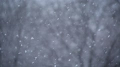 Snowfall on the background of trees - stock footage