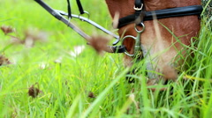 Horse chomping down on grass - stock footage