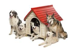 Group of dogs in and surrounding a kennel against white background Stock Photos