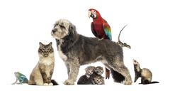 Group of pets,Group of pets - Dog, cat, bird, reptile, rabbit, isolated on white Stock Photos