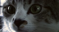 Cat footage Stock Footage