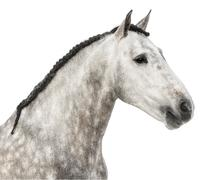 Close-up of an Andalusian head, 7 years old, also known as the Pure Spanish Hors Stock Photos