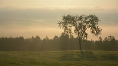 Elm tree standing on field.mp4 - stock footage