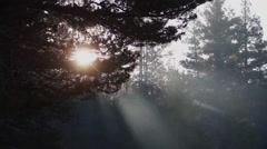 Morning Mist through Trees - stock footage