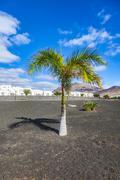 Palme im Neubaugebiet von Playa Blanca - stock photo