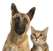 close-up of a cat and dog, isolated on white - stock photo