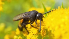 Wild flowers and hornet insects macro Slow Motion Stock Footage