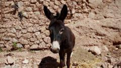 Donkey in Morocco Stock Footage
