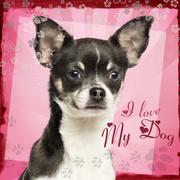 Close-up of a Chihuahua on fancy background, 7 months old - stock photo