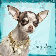 Close-up of Chihuahua with fancy collar, on flowery background - stock photo