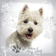 Close-up of a West Highland White Terrier panting, 18 months old, on designed ba Stock Photos