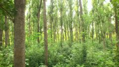 Tracking Shot Through Forest Trees Woods Sun Shining Through Trees Nature Beauty Stock Footage
