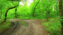 Woods forest. trees background. green nature landscape. wilderness Stock Footage
