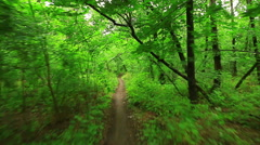 Woods forest. trees background. green nature landscape. wilderness Arkistovideo
