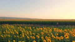 Aerial Shot Of Farm Girl Riding A Bicycle Through Rural Land Sunflower Field Stock Footage
