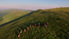 Beautiful Horses Galloping Running Through Meadow Mountain Aerial Wild Life Stock Footage