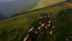 Aerial Fly Over A Her Of Horses Running Through Mountain Meadow Beautiful Sunset Stock Footage