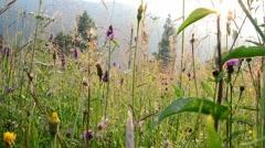 Shooting of wild flowers Stock Footage