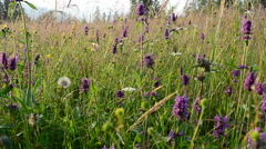 Meadow and decline Stock Footage