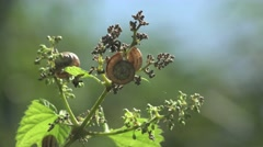 Snail in green leaves on a tree branch in the forest, 4k - stock footage