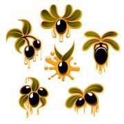 Olive branches with black fruits and oil drops - stock illustration