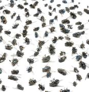 Close-up of a group of dead flies, isolated on white - stock photo