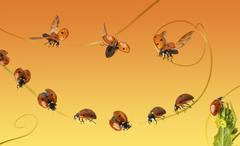 Composition of a cloud of ladybirds on a orange gradient background - stock photo