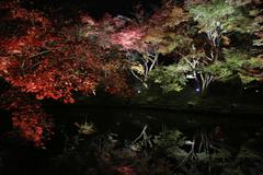 Stock Photo of fall season of kodaiji night