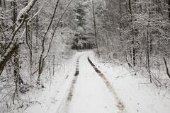 the winter road - stock photo