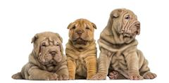 Front view of Shar Pei puppies sitting in a row, isolated on white - stock photo