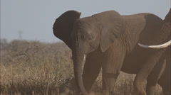 Two clip combo of Adult Elephant and baby Elephant throwing sand Stock Footage