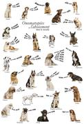 Composition of dog barking onomatopoeias from the world, French version Stock Photos