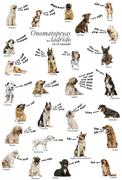 Composition of dog barking onomatopoeias from the world, Spanish version Stock Photos