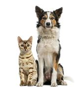 Cat and dog sitting together and facing at the camera Stock Photos