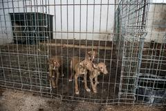 Abandoned dogs in a cage Stock Photos