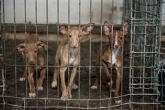 Abandoned dogs in a cage - stock photo